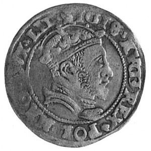 grosz litewski na stopę litewską 1546, Wilno, Aw: Popie...