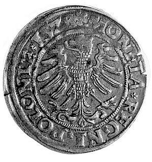 grosz 1528, Kraków, j.w., Gum. 483, Kurp. 47 R, ładna s...