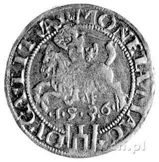 grosz 1536, Wilno, pod Pogonią literka F, Kurp. 218 R3,...