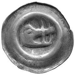 Świdnica- miasto, brakteat 1341 r; Głowa dzika w prawo,...