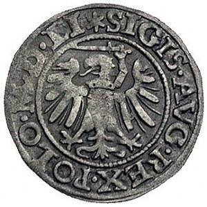 szeląg 1549, Gdańsk, Kurp. 93 R3, Gum. 641, T. 15, rzad...