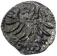 denar 1555, Gdańsk, Kurp. 926 R3, Gum. 640, T.8, ciemna...