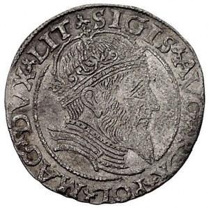 grosz na stopę litewską 1559, Wilno, Kurp. 794 (R3), Gu...