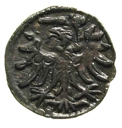 denar 1554, Gdańsk, odmiana z szeroką koroną, T. 8, rza...