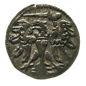 denar 1557, Gdańsk, odmiana z wąską i płaską koroną, T....