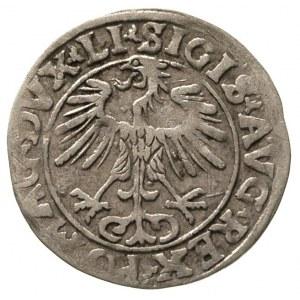 półgrosz 1556, Wilno, rzadsza odmiana z omyłkowym napis...