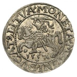 półgrosz 1557, Wilno, mała data i trójlistki na awersie...