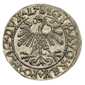 półgrosz 1559, Wilno, Ivanauskas 4SA86-24, ładny egzemp...