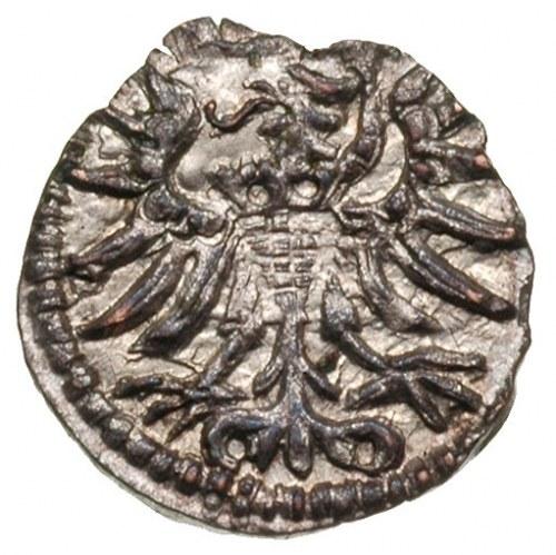 denar 1555, Gdańsk, T. 6, lekko wyszczerbiony krążek, a...