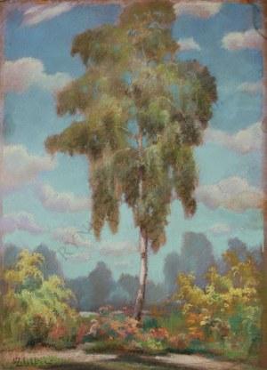 Wacław Żaboklicki (1879-1959), Samotna brzoza