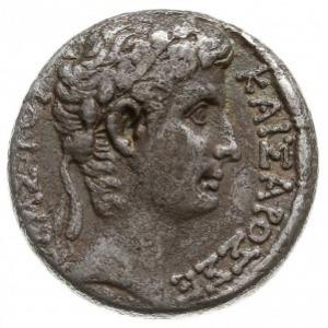 tetradrachma 5 rok pne (26 rok), Antiochia, Aw: Głowa c...