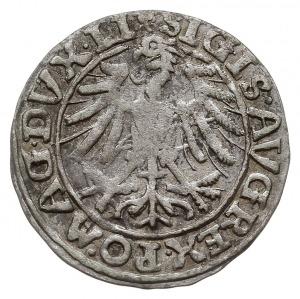 półgrosz 1557, Wilno, na awersie rzadka odmiana z trójl...