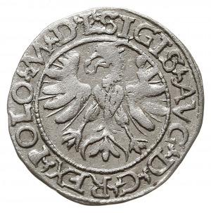półgrosz 1566, Tykocin, odmiana z dużym herbem Jastrzęb...