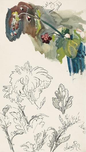Stanisław KAMOCKI (1875-1944), Studia gałązki z polnymi kwiatami, chryzantemy, 1899