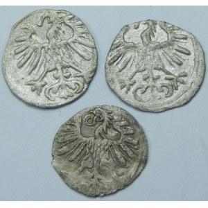 Zygmunt II August, Denar Wilno – zestaw (szt. 3)
