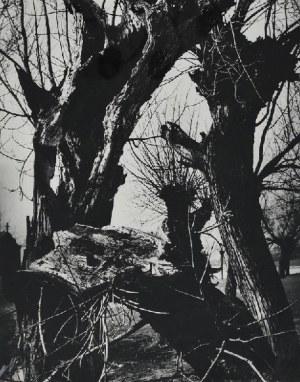 Edward HARTWIG (1909-2003), Rodzima sprawa, 1985