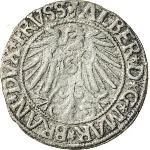 Prusy Książęce, Albrecht Hohenzollern (1525–1568), grosz pruski lenny, Królewiec; 1545