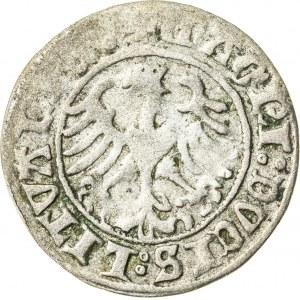 Zygmunt I Stary (1506–1548), półgrosz litewski, Wilno; 1510