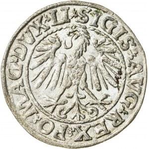 Zygmunt II August [1544 (1548) –1572], półgrosz litewski, Wilno; 1547