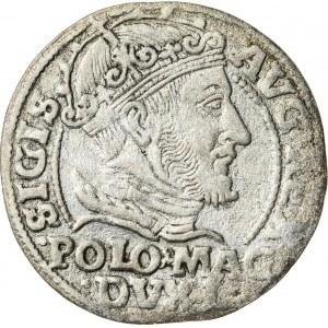 Zygmunt II August [1544 (1548) –1572], grosz litewski na stopę polską, Wilno; 1548