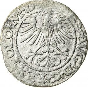 Zygmunt II August [1544 (1548) –1572], półgrosz litewski, Wilno; 1564
