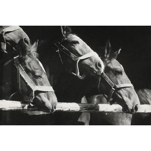 Henryk HERMANOWICZ (1912-1992), Konie