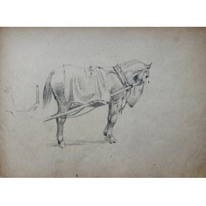 Ludwik Antoni Maciąg (1920-2007), Szkic konia w uprzęży