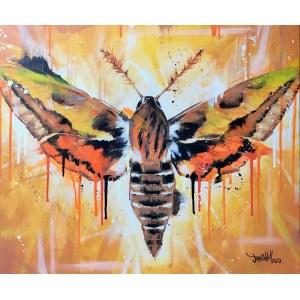 Jose Angel Hill, Black Butterfly