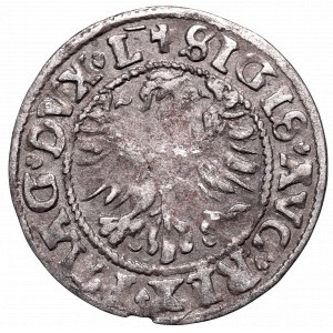 Sigismund II Augustus, Halfgroat 1546, Vilnius