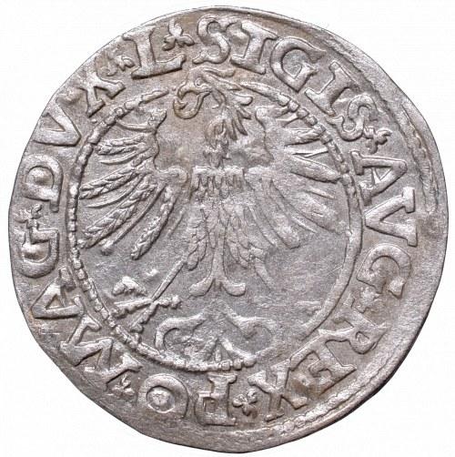Sigismund II Augustus, Half-groat 1563, Vilnius, L/LITV