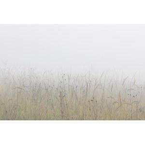 Janusz Wojcieszak, The meadow, 2015/2020