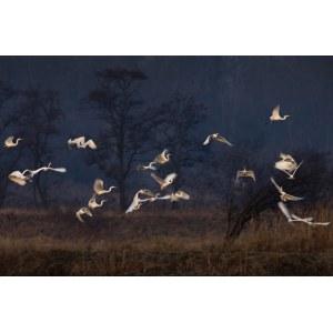 Janusz Wojcieszak, The white herons, 2009/2020