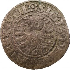 Zygmunt I Stary (1506-1548) - szeląg 1531 - Gdańsk