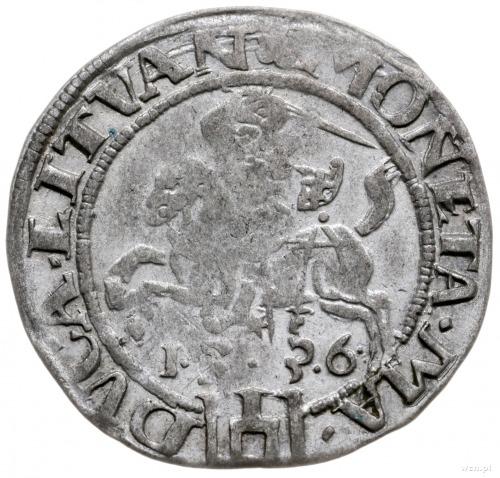 grosz 1536/F, Wilno; odmiana z literą F pod Pogonią, kr...