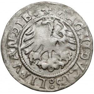 Zygmunt I Stary, Półgrosz Wilno 1523 - błąd LITVANDIE - rzadki