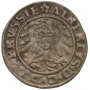 Prusy, Albrecht Hohenzollern, Szeląg Królewiec 1531
