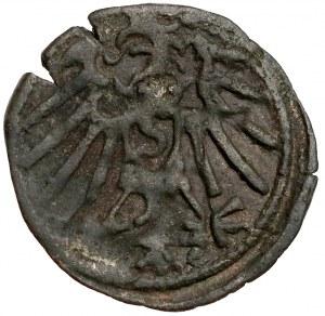 Prusy, Albrecht Hohenzollern, Denar Królewiec bez daty