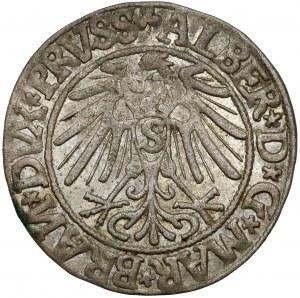 Prusy, Albrecht Hohenzollern, Grosz Królewiec 1544 - Spiczasta broda