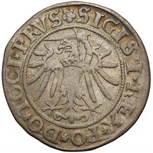 Zygmunt I Stary, Grosz Elbląg 1534 - PRVS