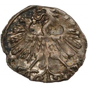 Zygmunt II August, Denar Wilno 1558