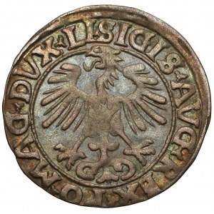 Zygmunt II August, Półgrosz Wilno 1556 - LI