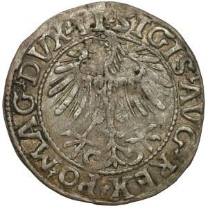 Zygmunt II August, Półgrosz Wilno 1557 - LI