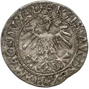 Zygmunt II August, Półgrosz Wilno 1559 - LITVA - rzadki