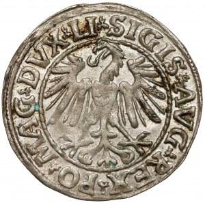Zygmunt II August, Półgrosz Wilno 1547 - LITVA