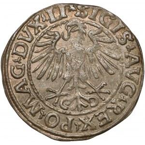 Zygmunt II August, Półgrosz Wilno 1548