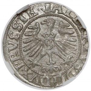 Prusy, Albrecht Hohenzollern, Szeląg Królewiec 1557