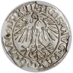 Zygmunt II August, Półgrosz Wilno 1549 - PIĘKNY
