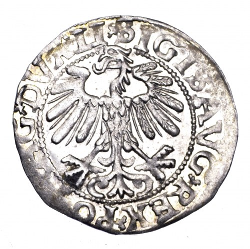 Zygmunt August, półgrosz 1558, Wilno