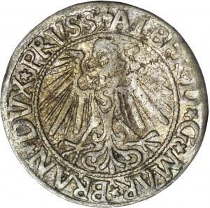 Lenne Prusy Książęce, Albrecht Hohenzollern, Grosz 1545, Królewiec