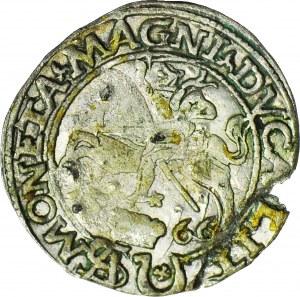 RR,- Zygmunt II August, Grosz 1566, Tykocin z herbem Jastrzębiec, bardzo rzadki